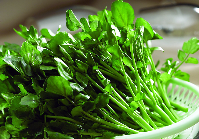 The Definitive Watercress Recipes Chinese Guide